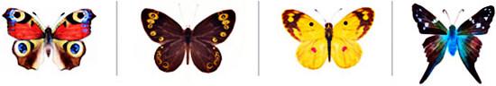 """""""Antología para la mariposa"""""""