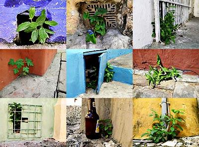 Revista Asfódelo N° 8 - Fotografías de Cartagena de Rafael Ortiz