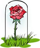 La Rosa de El Principito