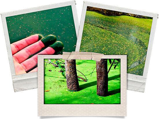 Imágenes de ejemplo del proceso de la eutrofización del agua