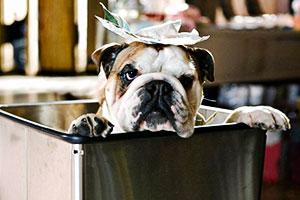 Hotel para perros - Thor Freudenthal