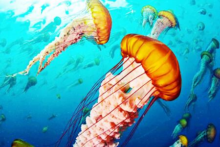 La vida en los océanos